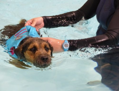 Duchy Canine Hydrotherapy here at Penbugle
