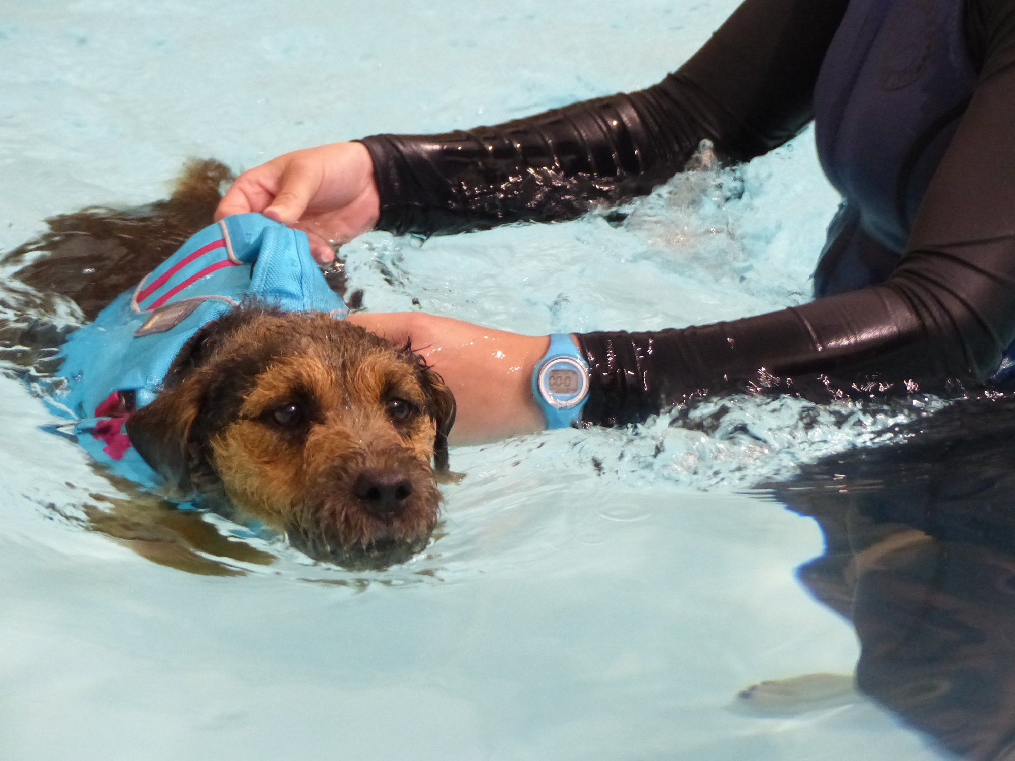 Duchy Canine Hydrotherapy